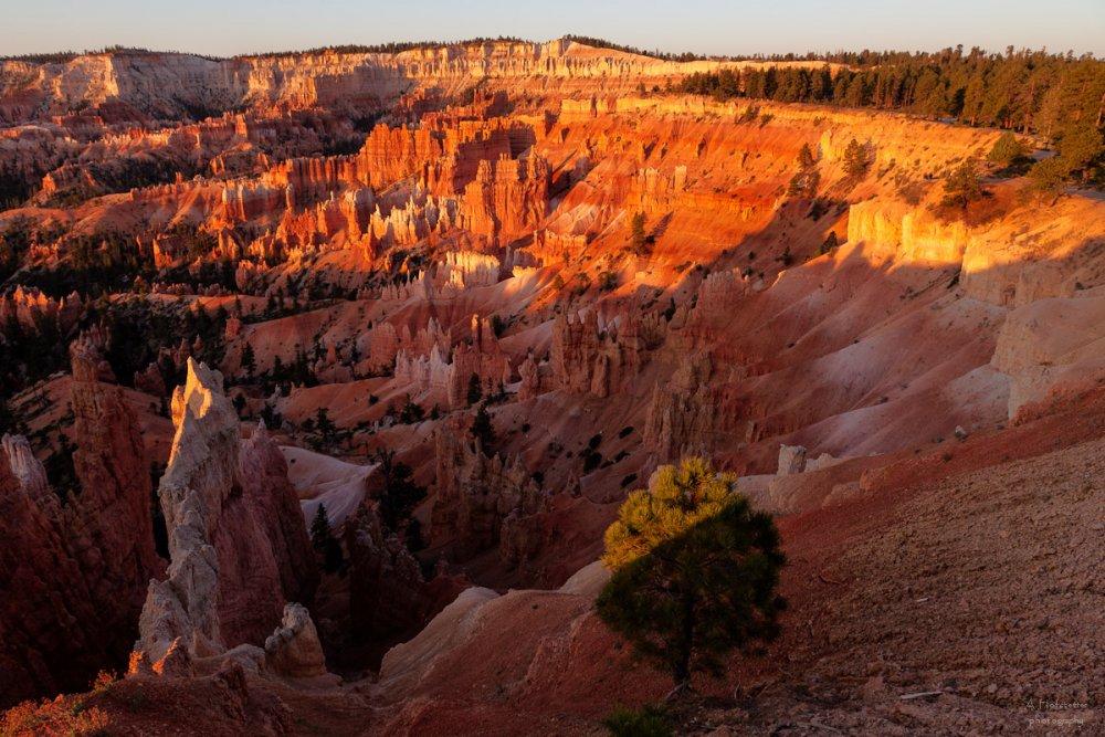 Das Amphytheather des Bryce Canyon im Morgenlicht