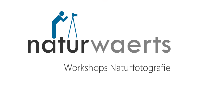 Logo_Workshop_web