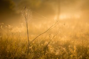 Herbstliches Moor