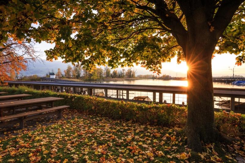 Herbstlicher Holzsteg